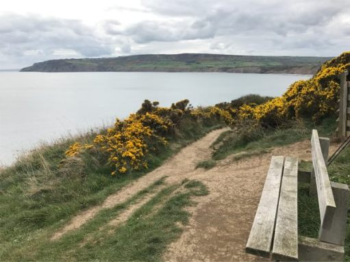 Bench overlooking Robin Hood's Bay.