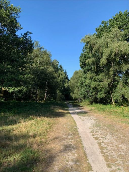 Tree-lined gravel path, with grass to each side.