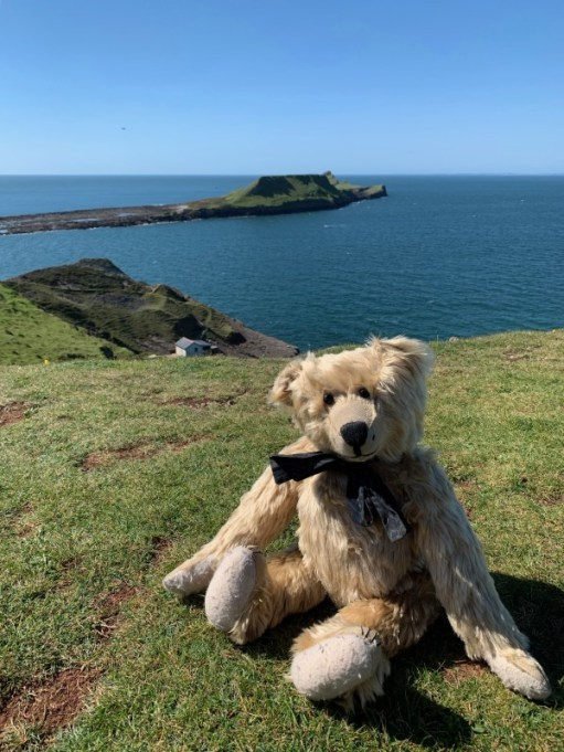 Bertie on Worms Head Island.