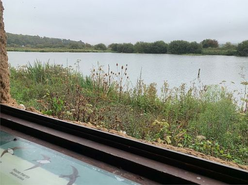 The view from the hide, where you can see dozens of little birds flashing to and fro.
