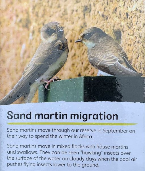 Information board on Sand Martins.