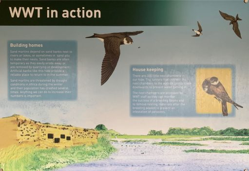 Information board on WWT.