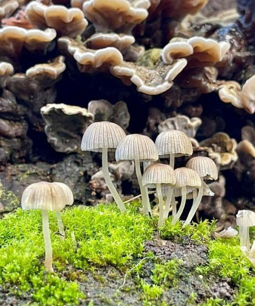 A collection of fungi resembling Jellyfish on dry land.