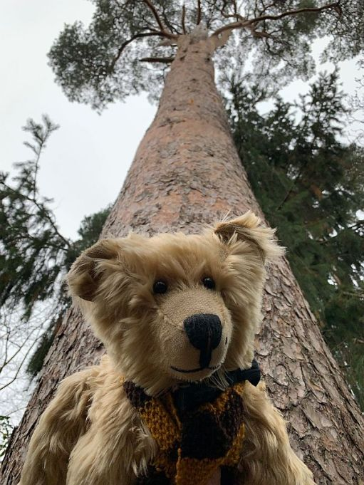 Bertie at the bottom of a tree, with the tree towering above him.