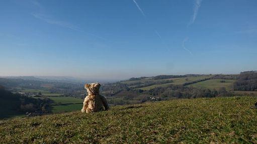 Rear view of Bertie sat on Swift's Hill.