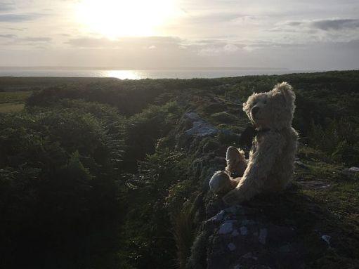 Bertie admiring the sunrise on Skokholm Island.