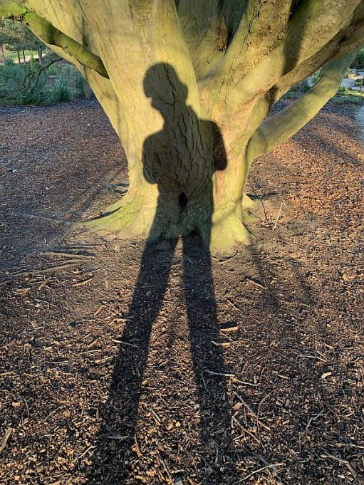Bobby's shadow cast against the Carpinus Betulus Fastigiata as he takes a photo.