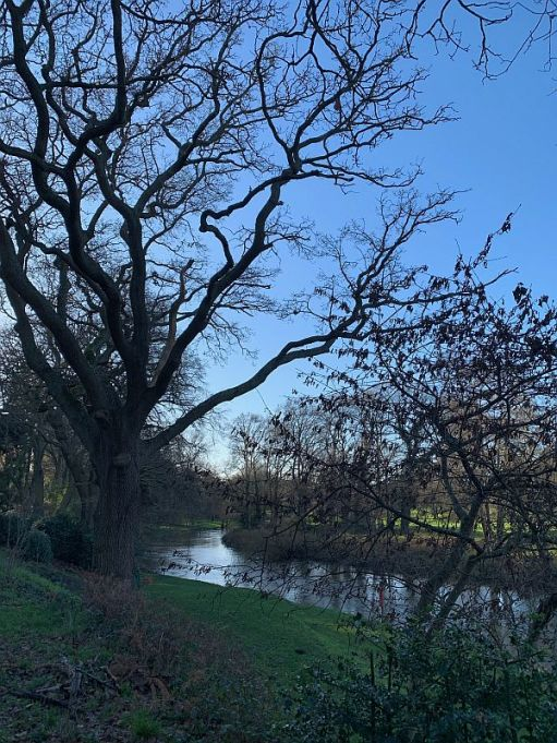Tree-lined River Wey.