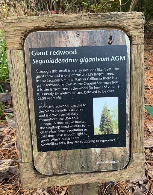 Interepretation Board for the Giant Redwood.