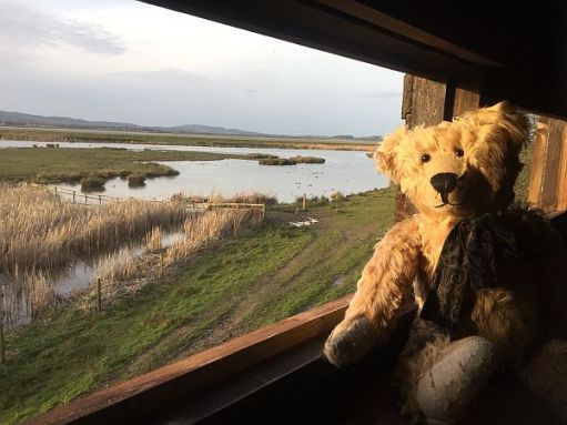 Bertie in a hide at Slimbridge over looking the River Severn Estuary.