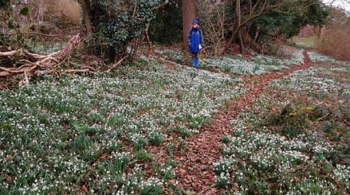 Aldith standing amongst the snowdrops.