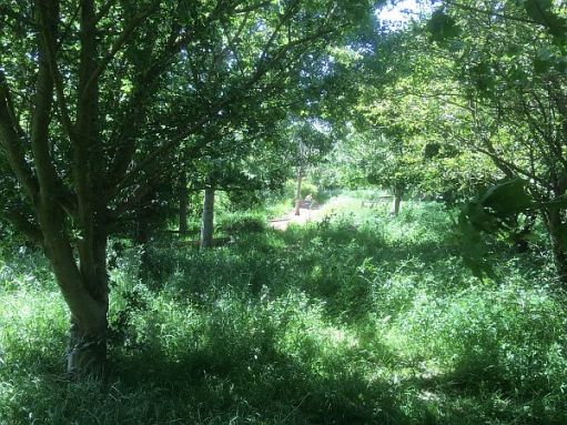Trees, tall grasses and wild flowers in the wildlife garden.