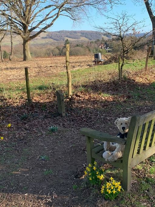 Bertie on a wooden bench with daffodils and a country view.