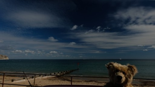 Bertie, with Sandbanks Bay behind.