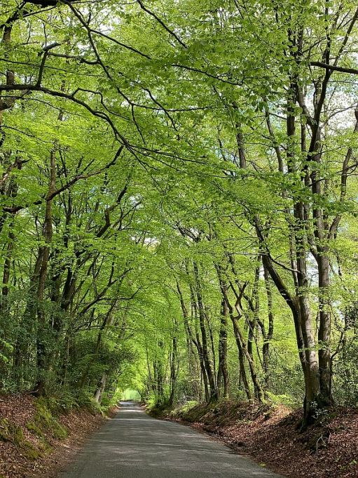 Tree lined road meandering down hill.