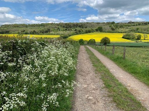 Farm track leading to a field of Rape.