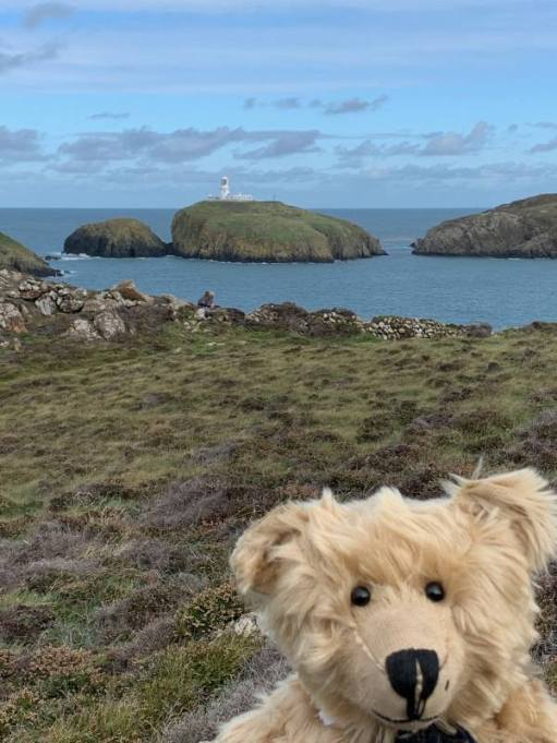 Bertie, with Strumble Head Lighthouse in the background.