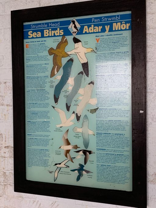 Strumble Head seabirds poster.