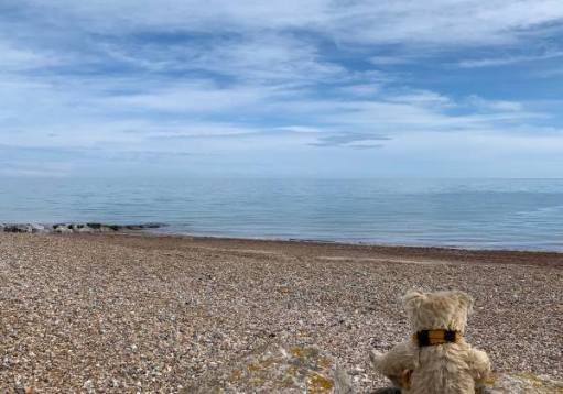 Bertie on East Preston Beach looking out to sea.