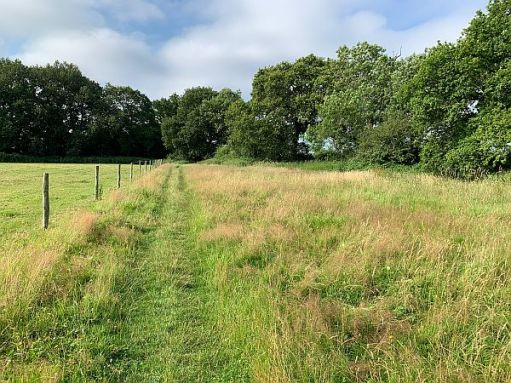 View of a grass path alongside a field. A wire fence to the left.