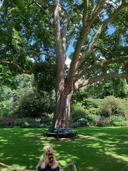 Bertie sat on a rope fence in front of a Plane tree, which has a circular metal seat around it.