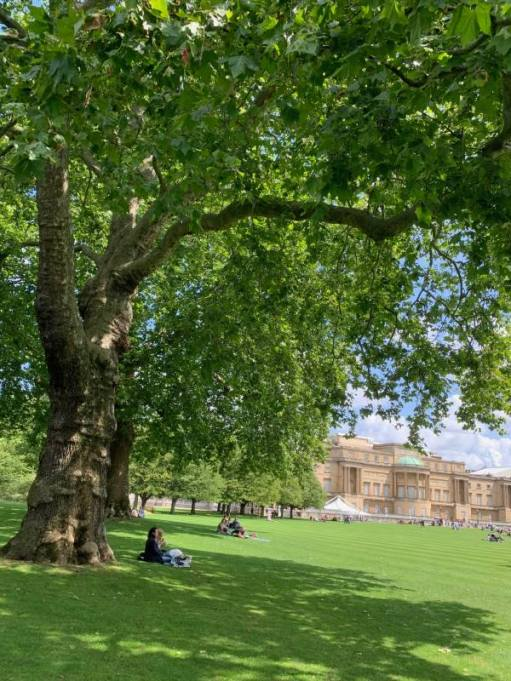 A tree with Buckingham Palace in the background.