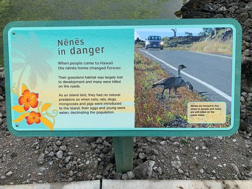 Sign about Nenes in Danger.