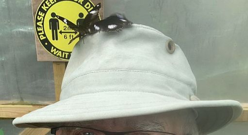 Two Butterflies on Bobby's hat.