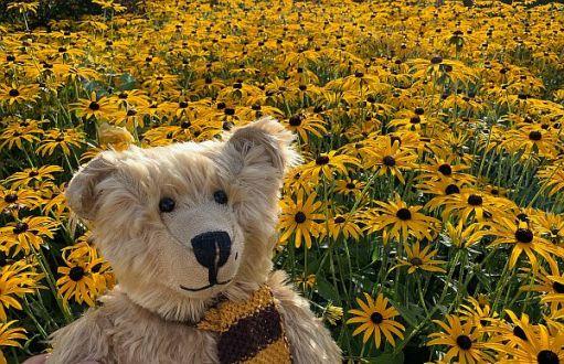 Bertie in the yellow flowers.