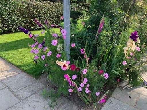 Flowers, Wisley Gardens.