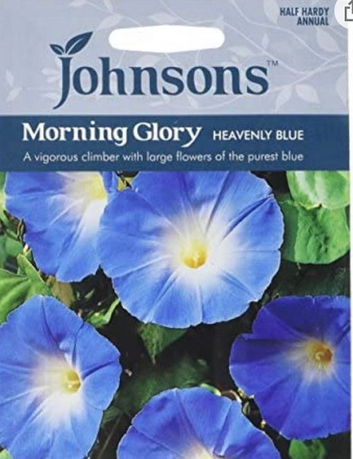 A packet of Johnson's Morning Glory Heavenly Blue seeds.