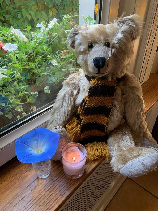 Bertie, wearing his Sutton United scarf, with a Morning Glory flower in a vase and a candle lit for Diddley.