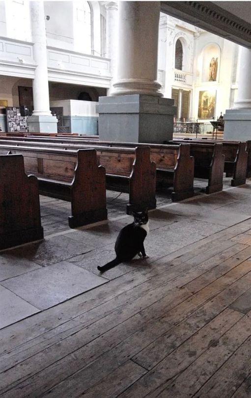 Black and White cat in a church.