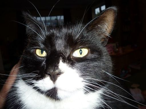 Close up of Marmite's black-and-white face.