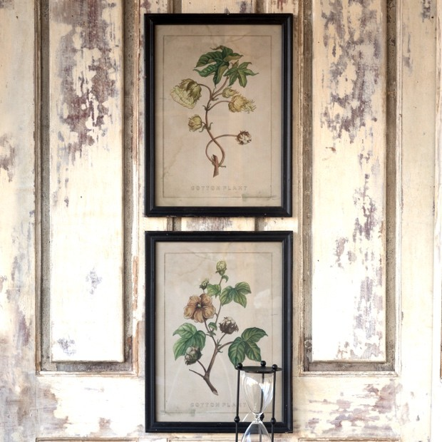 cotton-plant-botanical-prints-set-of-2