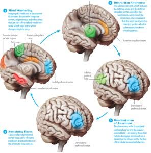 schema-hersenactiviteit