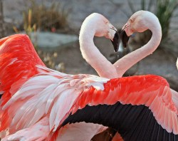 Skills - 6 Loving Relationship Agreements - Flamingos