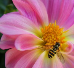 What We Can Learn From Pessimistic Bees