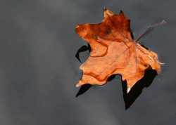 """""""Leaves on a Steam"""" - Cognitive Defusion Exercise"""