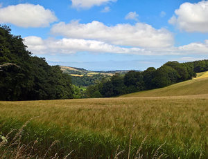 Fields by Sharpham