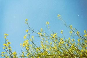 Mindfulness, Spring, St Albans