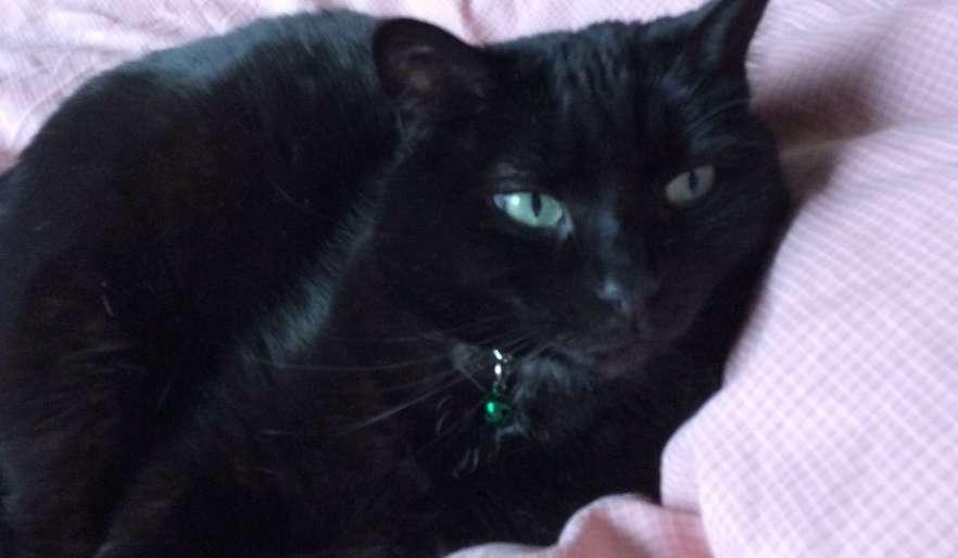 Durango kitty needs care (Sun, 18th August 2019, 8:48am) (United States)