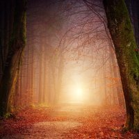 """Writing Prompt 2 - """"Open Your Eyes.  Come back."""""""