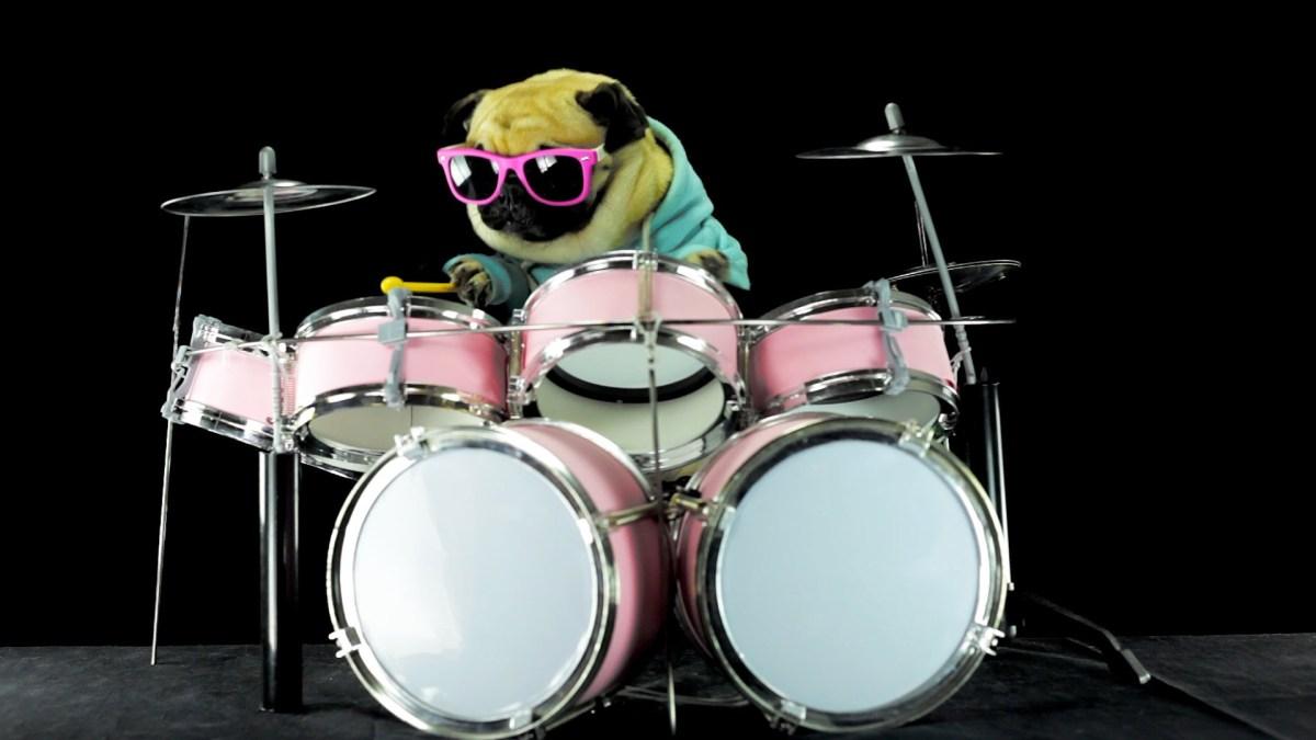 """Ein Mops spielt das Schlagzeug-Intro zu """"Enter Sandman"""""""