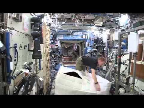 There's a Gorilla in the ISS!
