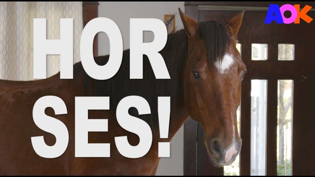 HORSES DON'T BELONG IN THE HOUSE!