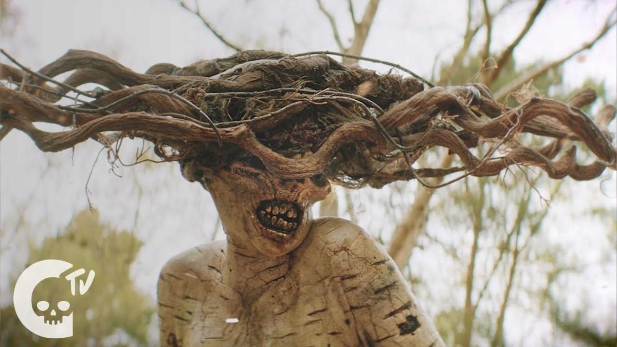 """Im Horror-Kurzfilm """"The Birch"""" ist eine Birke der beste Freund eines Jungen"""