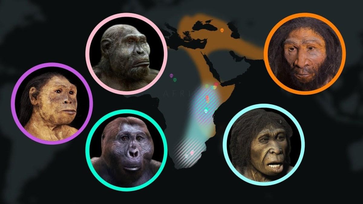 Eine animierte Timeline der menschlichen Evolution über 7 Millionen Jahre