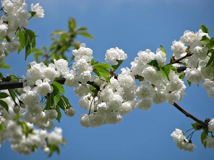 Afbeeldingsresultaat voor lente