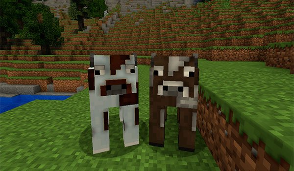 picture where we see two cows, decorated with texture pack default hd 1.8.